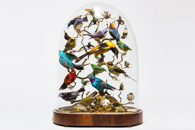 An impressive early 19th century taxidermy display of exotic birds under glass dome. Price realised £1,750.