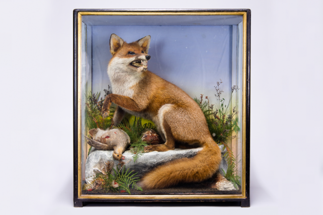 A late 19th century cased taxidermy Fox with Partridge prey by James Hutchings. Price realised £600.