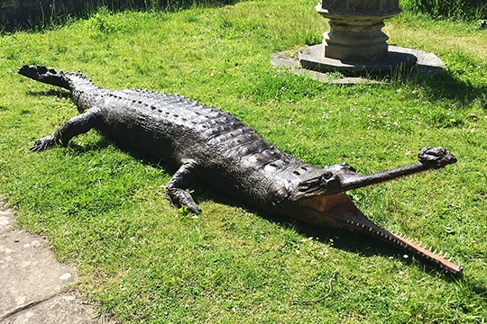 A 13ft victorian taxidermy full mount Gharial. Price realised £5,600.